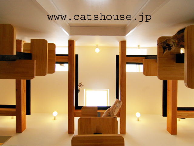 猫の家 The Cats' House TOP