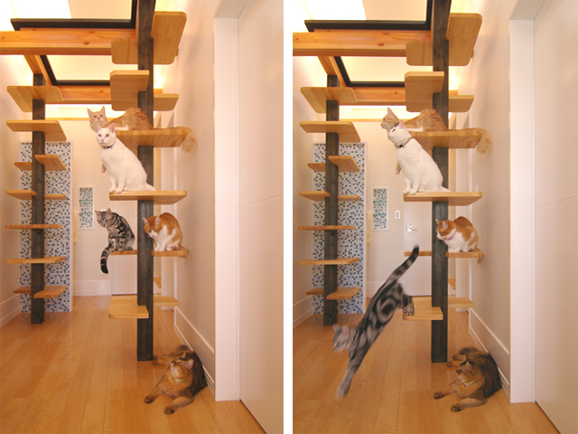 Cats playing in their house